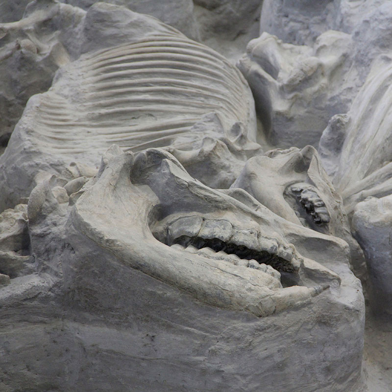 fossil bed