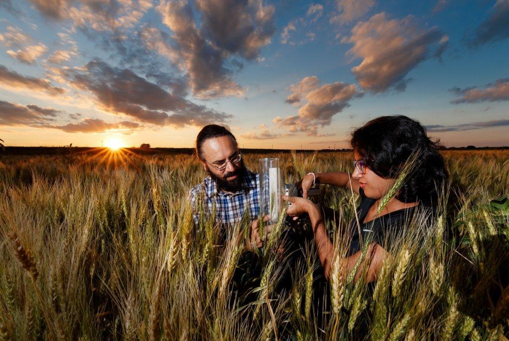 Harkamal Walia examining specimen in field